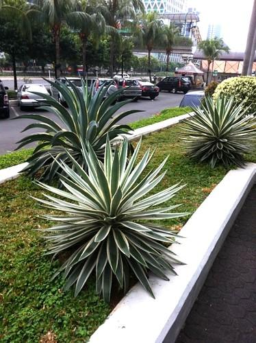 hotel_cacti