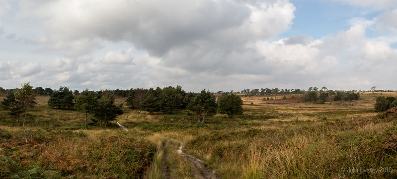 View across Canford Heath