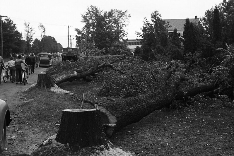 Trees cut on Rte. 195 (Storrs Road)