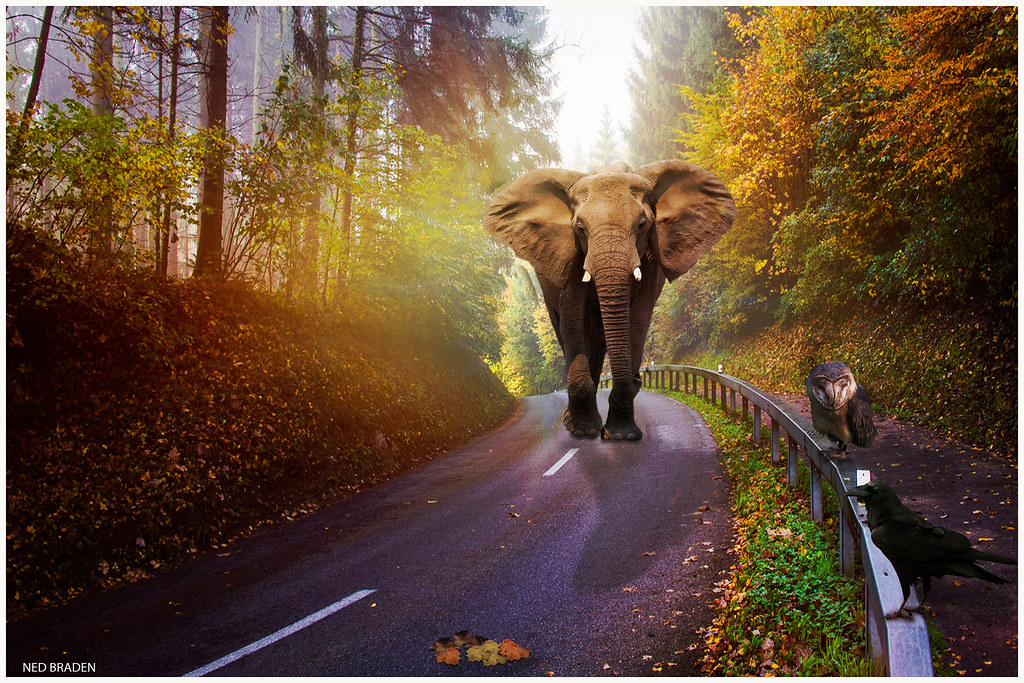 la route des elephants  29713615914_fc64d8129f_b