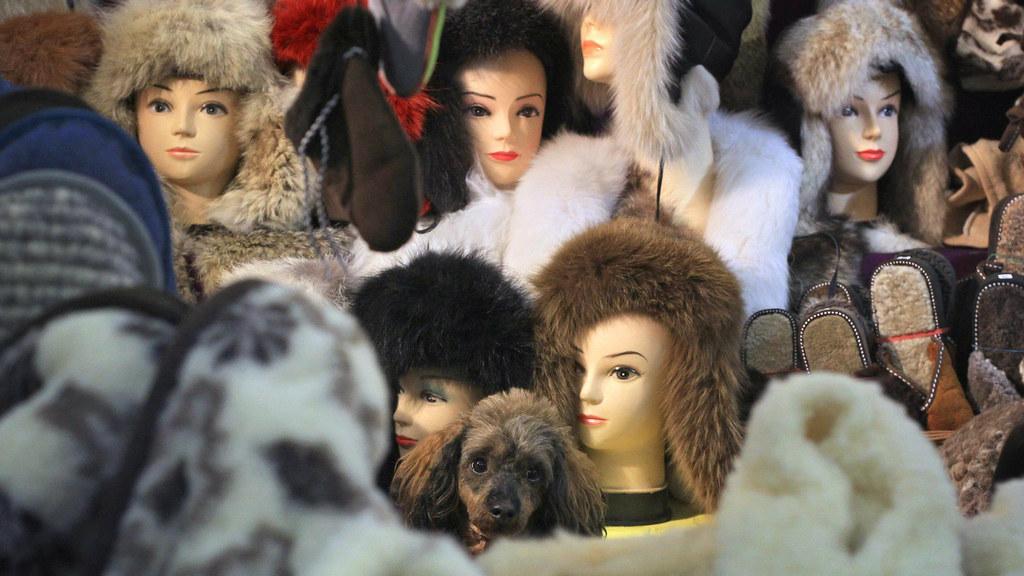 Hund-auf-Weihnachtsmarkt