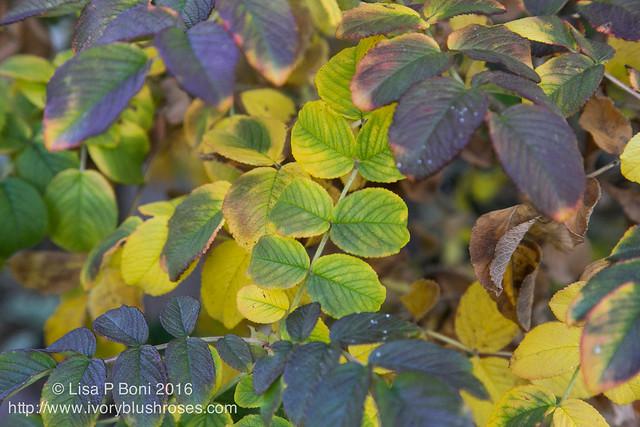 2016.10.31-Garden30