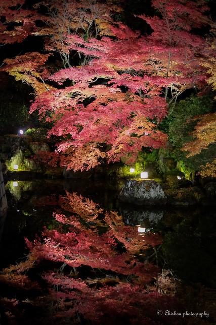京都~autumnal tints(2016)