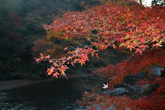 Autumn colors above the river