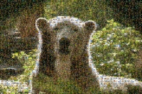 Ein Knut-Mosaik zu seinem 10. Geburtstag