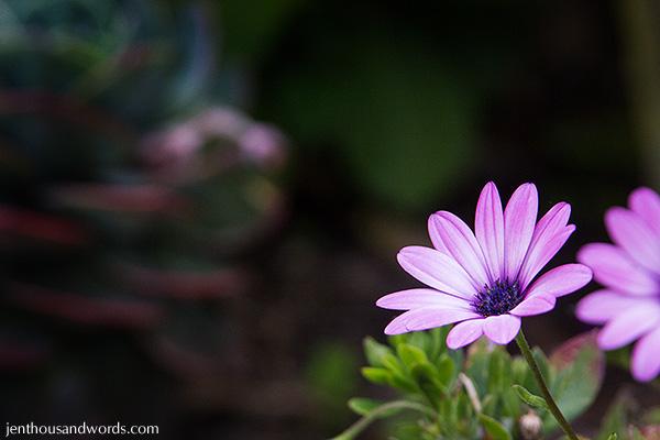 In the garden 02