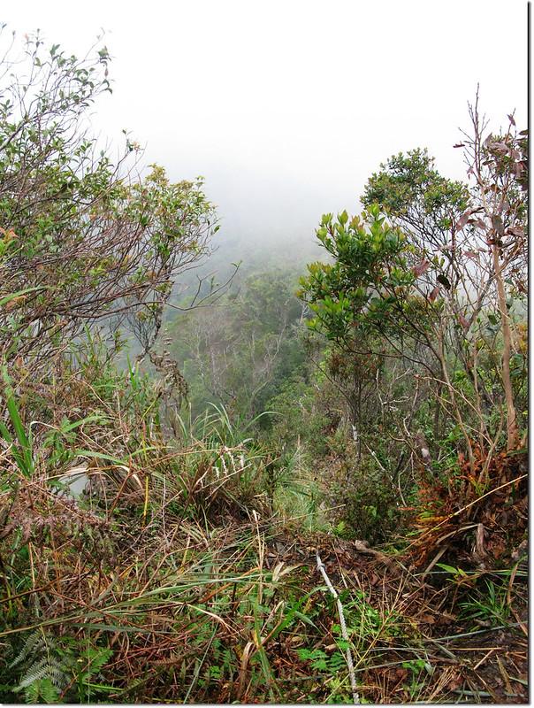 日湯真山山頂俯瞰濃霧中的鱈葉根稜線