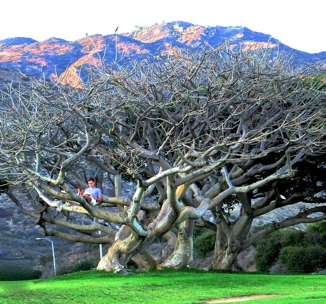 goodbye tree
