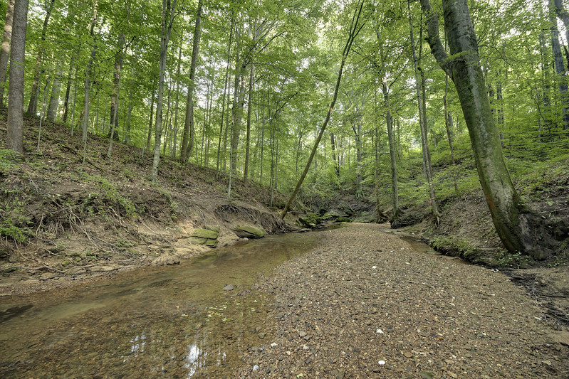 The Canal, Putnam County, Tennessee 3
