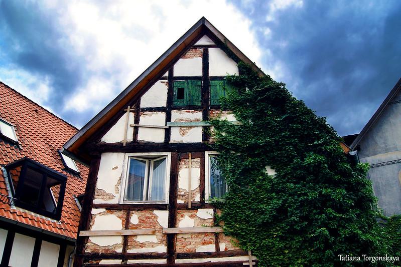 Старый дом, заросший плющом