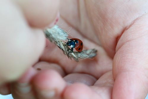 Ladybird in toddler hands