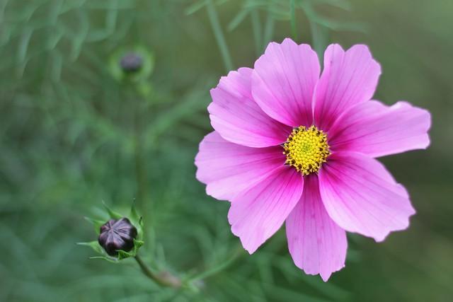Pretty flower in Cambridge - October