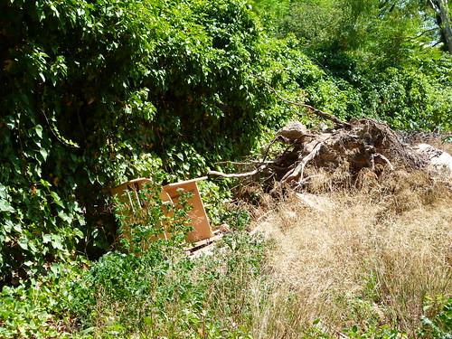 Abandono ruina y degradaci n en el jardines del real o for Viveros en segovia