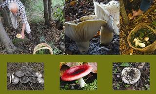 Corso raccoglitori funghi rutigliano