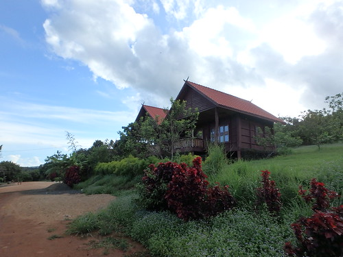 coffee-plantation-6