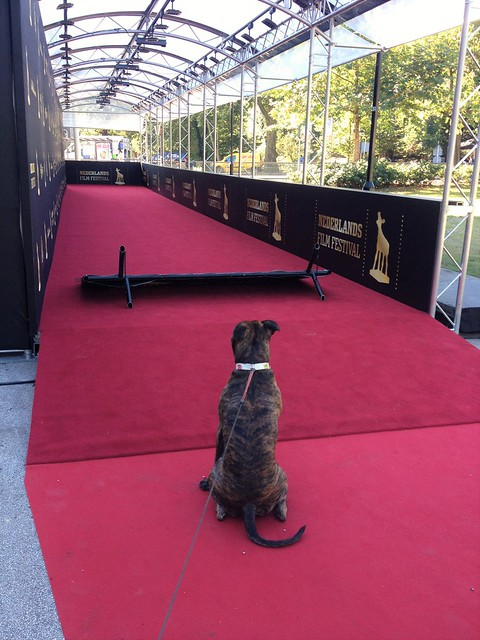 Ready for the Red Carpet