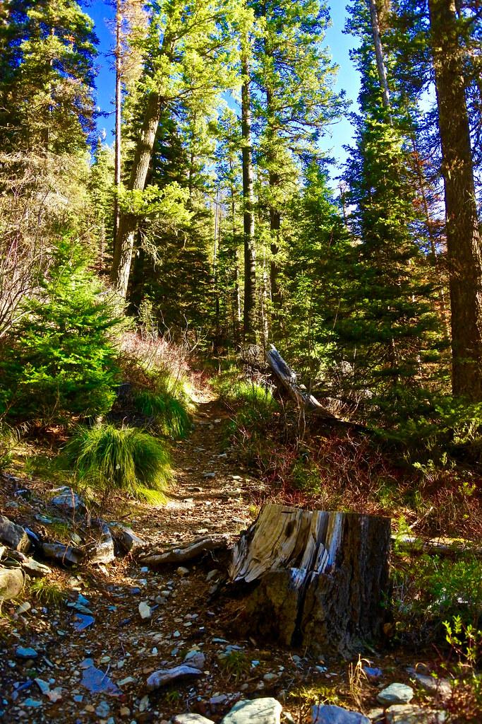 Cabin Lake trail 9