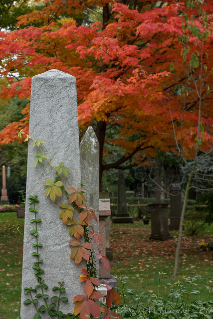 Fall Colour, Toronto Necropolis, October 2016
