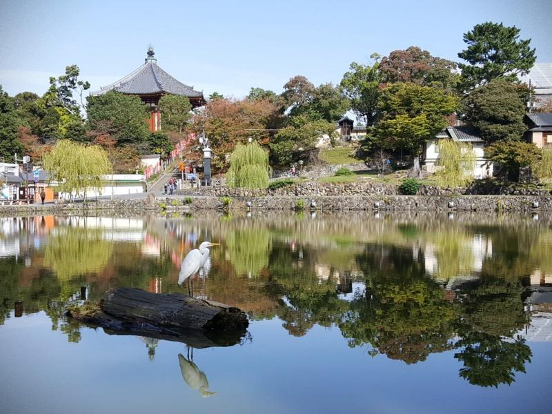 Nara Park heron