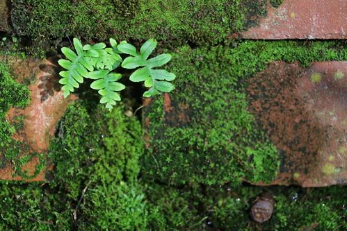 Brick's Green II (SOTC 220/365)