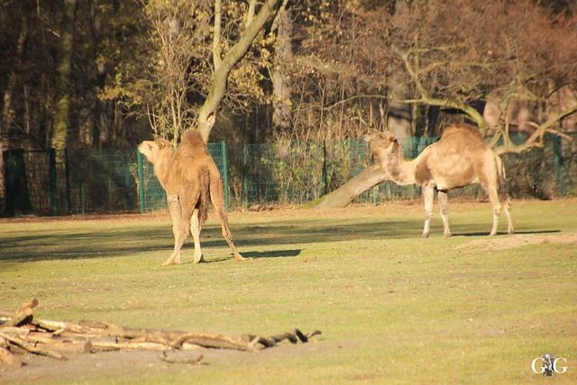 Tierpark Friedrichsfelde 20.11.20165