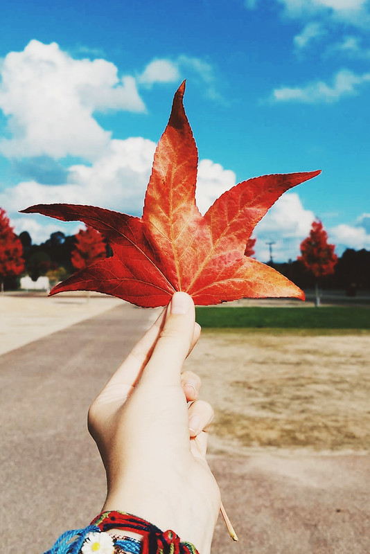 sinais de outono
