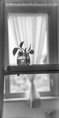 The seedling and the small glass jar