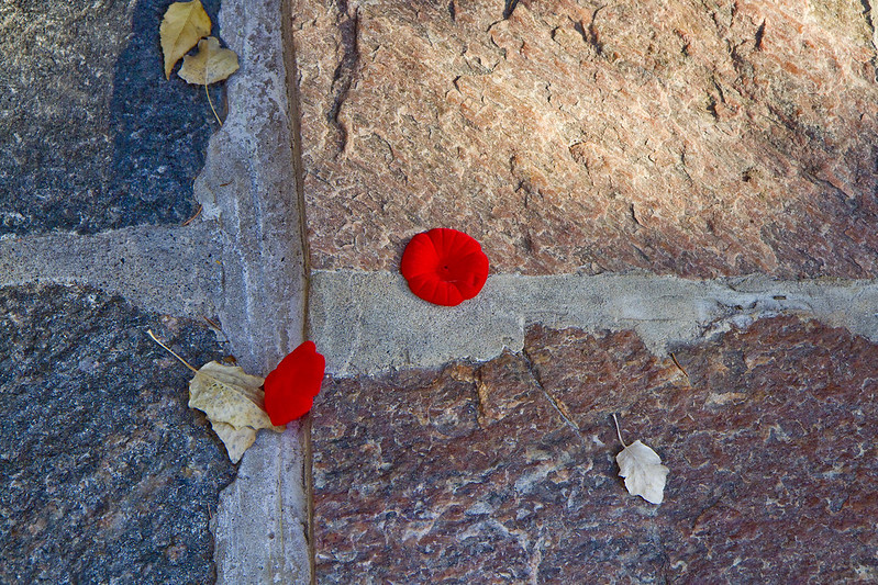 discarded poppies