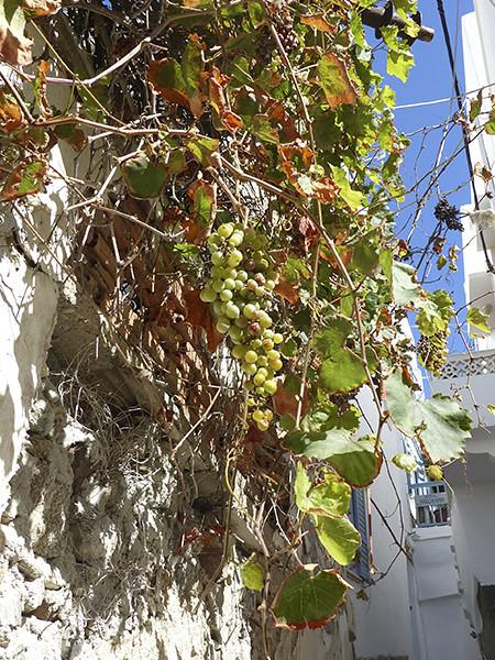 raisin blanc à Naxos