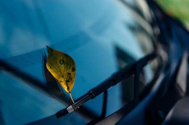 Autumnflavor_01