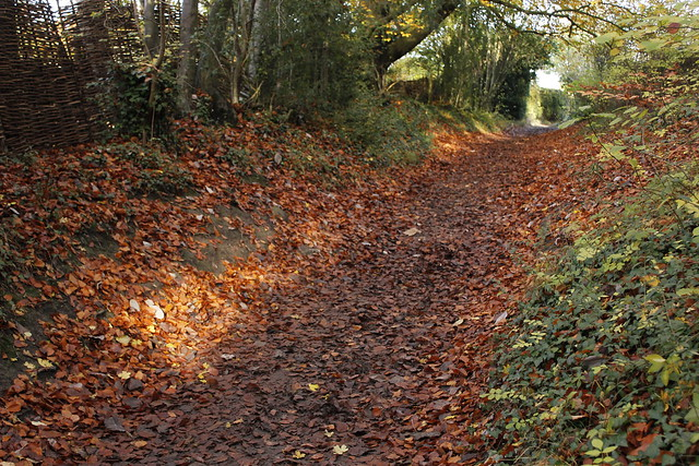Copper leaved pathway