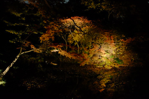 RIKUGIEN Colored Leaves light up 2016 15