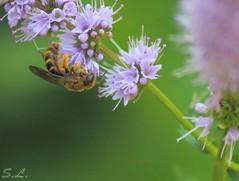 """""""La diligente abeille n'a pas de temps pour la tristesse."""""""