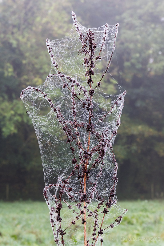 Covered in cobwebs - just in time for Halloween