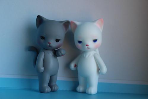 Cat Steward Companions