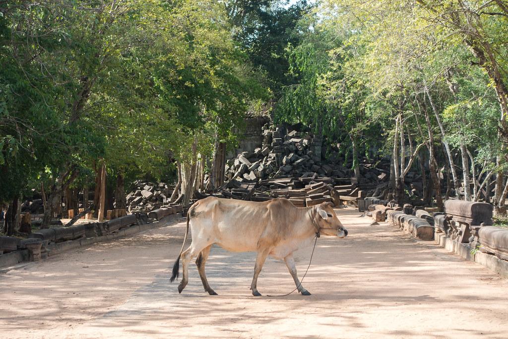Cambodia-02375