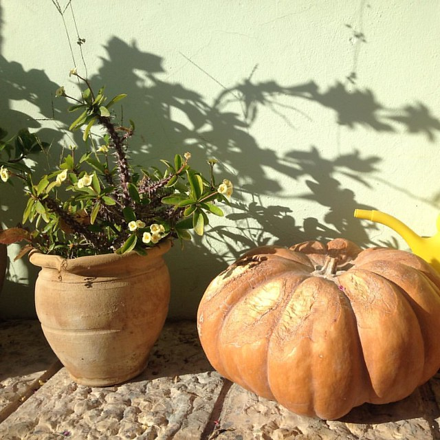 Pumpkin and thorns