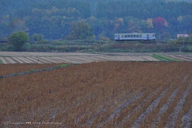 秋の富良野線1