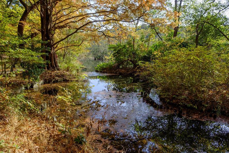 三宝寺池に続く水道