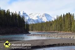 Promenade des glaciers Jasper