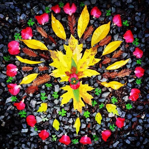Garden Mandala No. 84 Thankful #autumn #mandala #mandalaart #leaves #landart #gardenart #gardenartflowers #found #travel #thanksgiving #prayers #camellias #gratitude #redwoodsorrel #redwood #maple