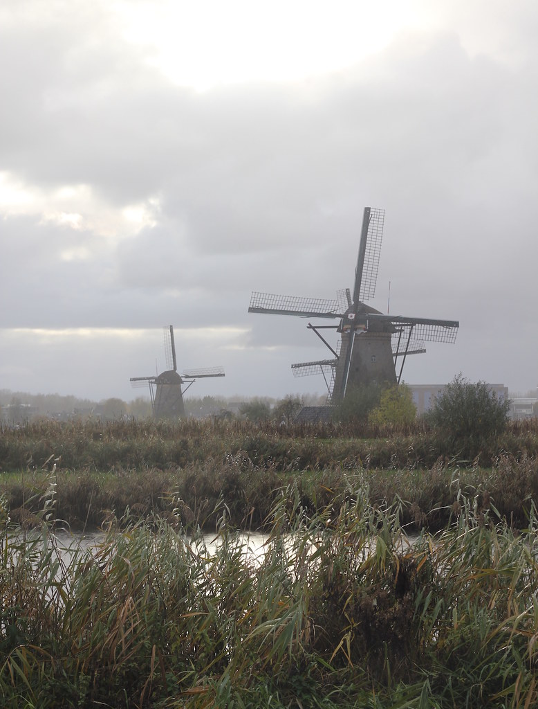 Misty November windmills Kinderdijk