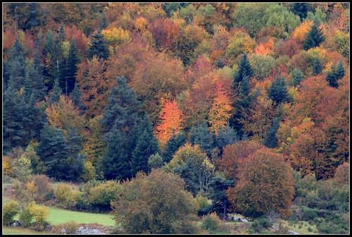 lumières d'automnes et paysages - automne 2016 30645232106_096d0cddcf