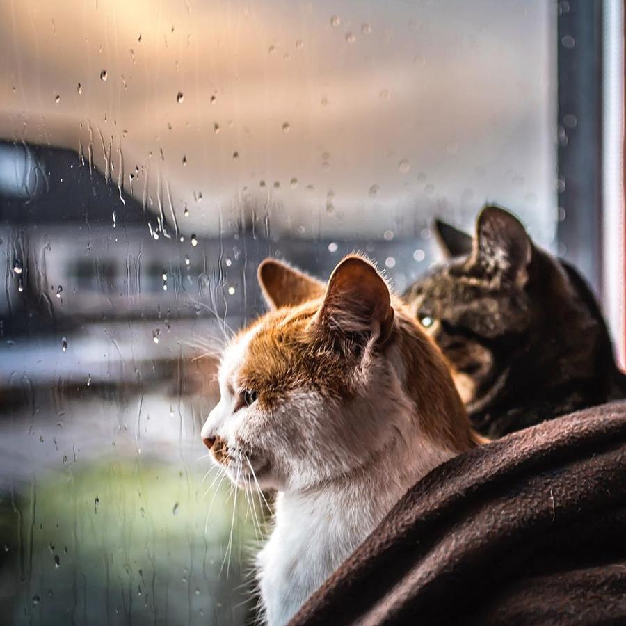 Они просто смотрели в окно… и стали популярны  - ПоЗиТиФфЧиК - сайт позитивного настроения!
