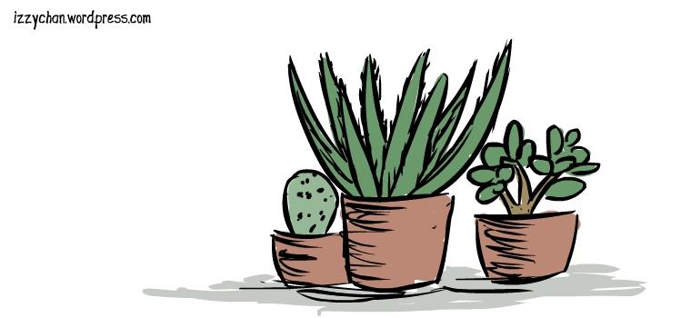 succulent plants aloe vera cactus jade plant