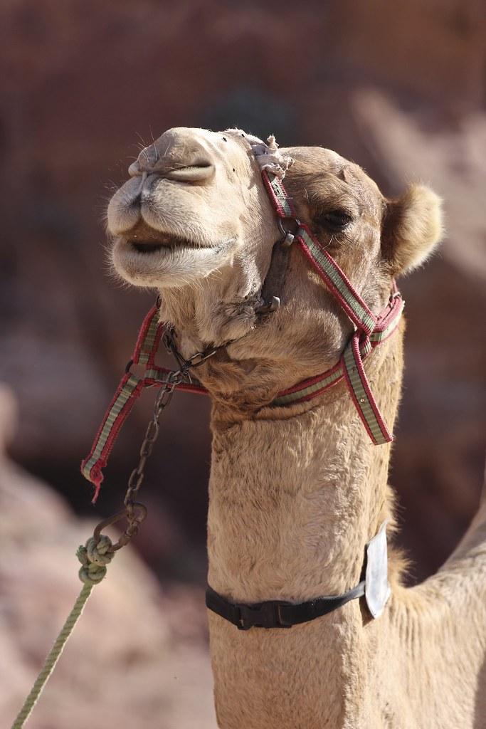 Jordanian matka, helppo ja turvallinen lomakohde