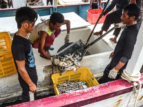 unloading crabs