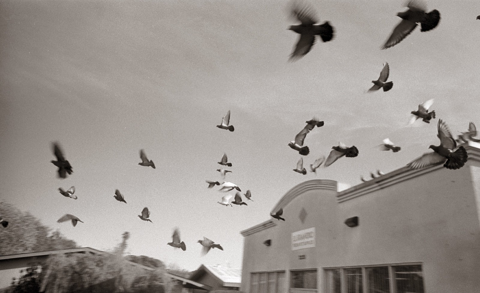 Flock | by efo