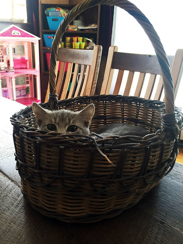 Mabel in a basket on the table