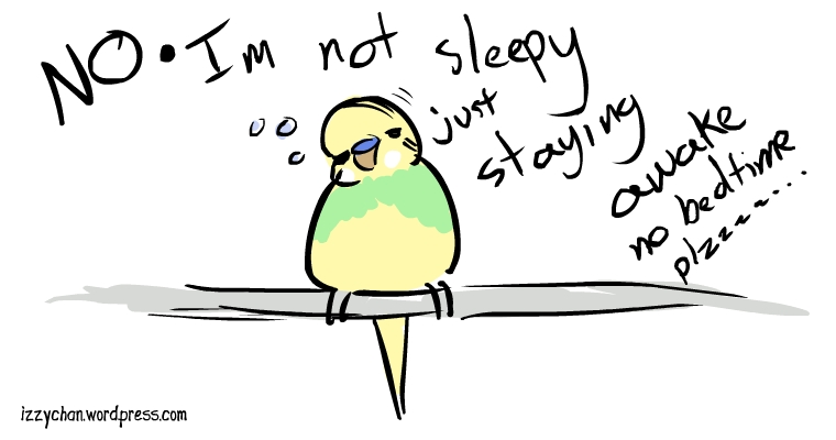 dennis budgie sleepy bird